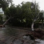 Fallen trees block a road after a typhoon in Hong Kong July 24, 2012. REUTERS/Bobby Yip