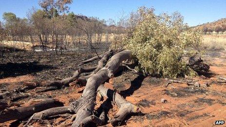 Australia ghost gum trees in Alice Springs 'arson attack'