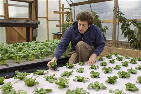 Chester County Food Bank agricultural director Bill Shick examines young lettuce plants growing in a hydroponic bed in a greenhouse in suburban Philadelphia