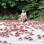 Migrating red crabs in Christmas Island, Australia
