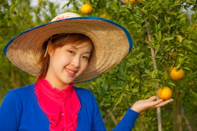 Gardener Girl In Orange Garden, North Of Thailand