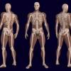 3d-anatomy-of-male-body